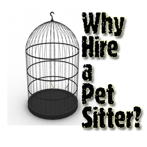 Why you need to hire a pet sitter